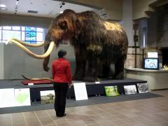 mammoth3_2.jpg