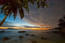 800px-Palm_tree_at_dawn_Patong_beach.jpg