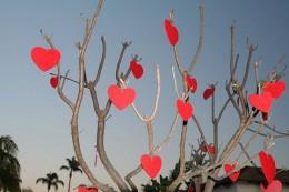 800px-Valentinesdaytree.jpg