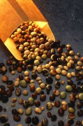 397px-Soybeanvarieties.jpg