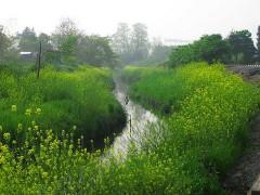 800px-Ageo_Haraichimuma_River_1.jpg