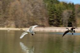 800px-Bird_Chase.jpg