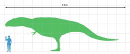 Giganotosaurus_scale.png