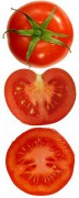 240px-Tomatoes_plain_and_sliced.jpg