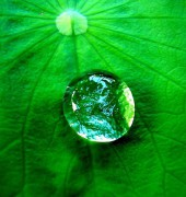 568px-Water_drop_on_a_leaf.jpg