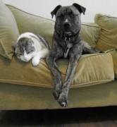 Trillium_Poncho_cat_dog.jpg