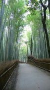 337px-Sagano_Bamboo_Forest_01.jpg