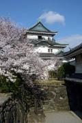 400px-Wakayama_Castle01-R.jpg