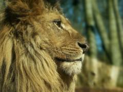 Eberswalde_zoo_014mod.JPG