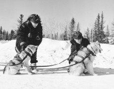 Rcmp_sled_dogs_1957.jpg