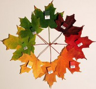 Autumn_leaves_pantone_crop.jpg