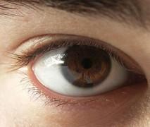 300px-Menschliches_Auge.jpg