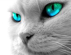 232px-White_cat_face.jpg