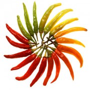 300px-Charleston_Hot_peppers_white_background.jpg