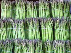 1200px-Asparagus_image.jpg