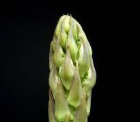 Asparagus_officinalis_ies.jpg