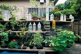 Bonsai_with_Stray_Cat_Repellent_PET_bottles_in_Japan.jpg