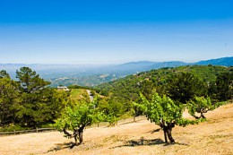 360px-View_from_Ridge_Winery_-_Santa_Cruz_Mountain_AVA.jpg