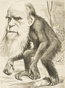 Editorial_cartoon_depicting_Charles_Darwin_as_an_ape_1871.jpg