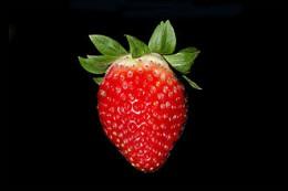 Strawberry_BNC.jpg