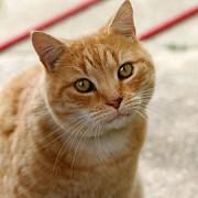 270px-Cat03.jpg