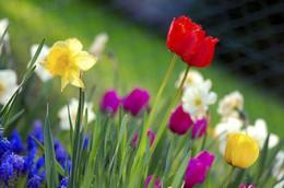330px-Colorful_spring_garden.jpg