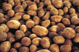 330px-Potatoes.jpg