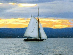 330px-Sloop_Clearwater3_-_Photo_by_Anthony_Pepitone.jpg