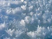 180px-Frostflowers2